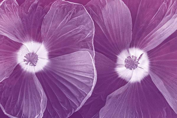Photograph - World Of Petals II by Leda Robertson