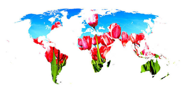 Photograph - World Of Tulips by Thomas M Pikolin