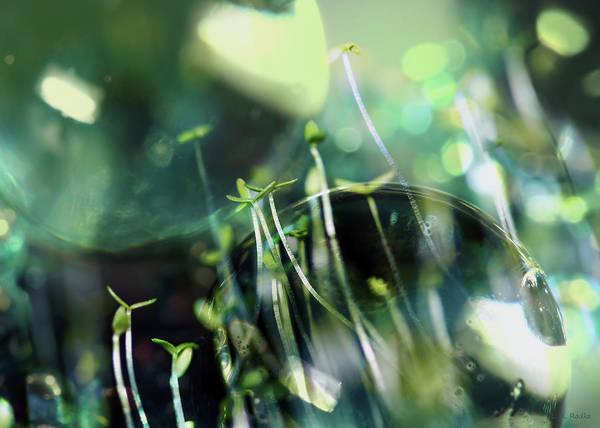 Photograph - Worlds Collide - New Life by Lauren Radke