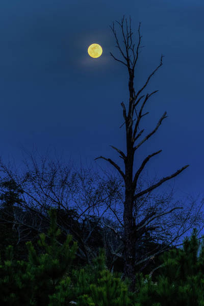 Photograph - Worm Moon by Jerry Gammon