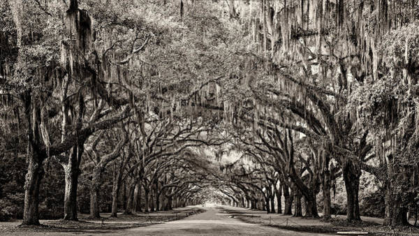 Photograph - Wormsloe by Heather Applegate