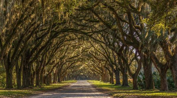 Wormsloe Historic Site Art Print