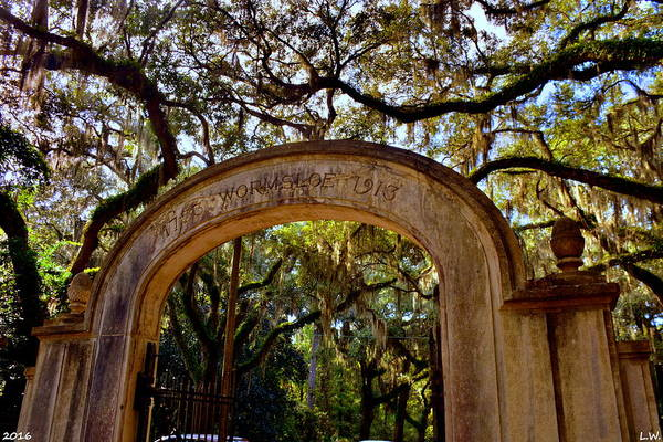 Photograph - Wormsloe Historic Site Isle Of Hope Ga by Lisa Wooten