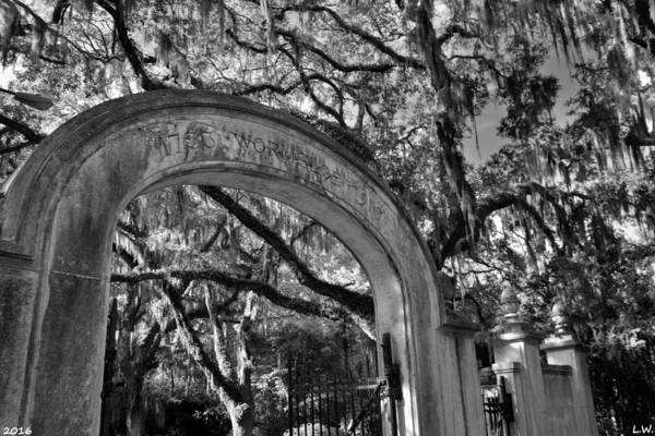 Photograph - Wormsloe Historic Site Isle Of Hope Ga Black And White by Lisa Wooten