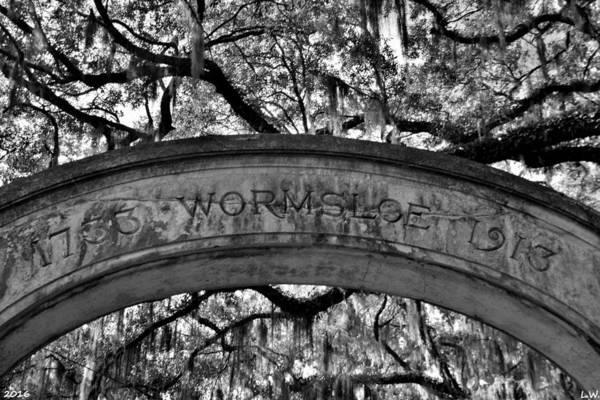 Photograph - Wormsloe Plantation Isle Of Hope Ga Black And White by Lisa Wooten
