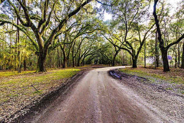 Photograph - Wormsloe Road by Anthony Baatz