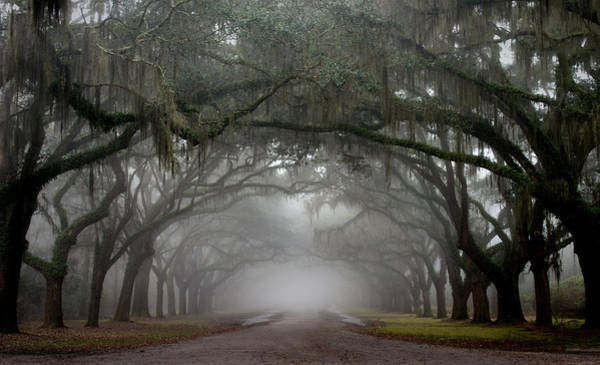 Wall Art - Photograph - Wormsloe by Greg Waters