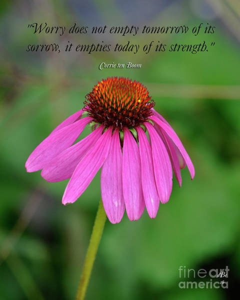 Wall Art - Photograph - Worry Coneflower by Diane E Berry
