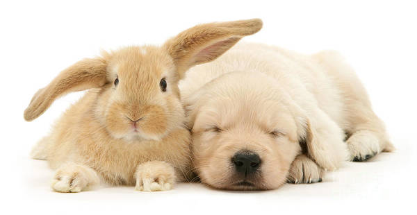 Photograph - Puppy Bunny Love by Warren Photographic