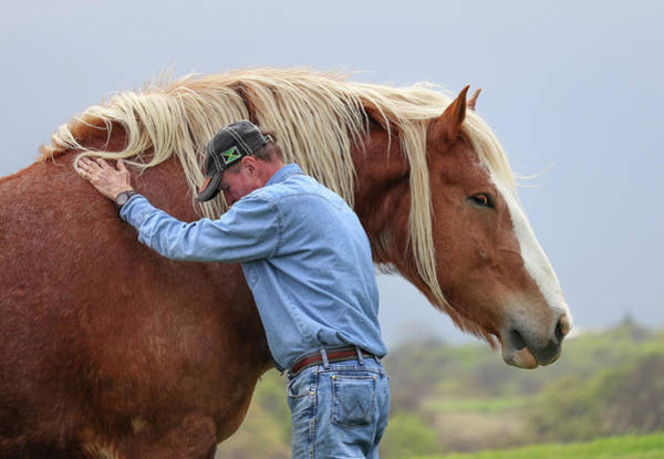 Photograph - Wrangler Jeans And Belgian Horse by Robert Bellomy