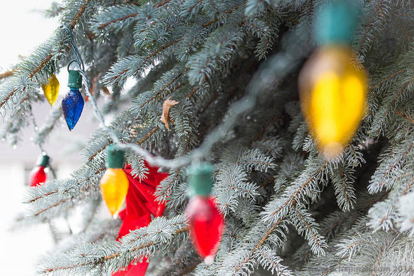 Photograph - Wrap A Tree In Color by Lora Lee Chapman