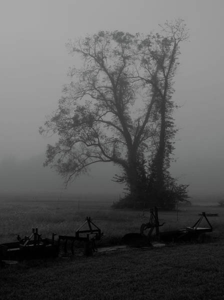 Photograph - Wrapped In Fog by Karen Harrison
