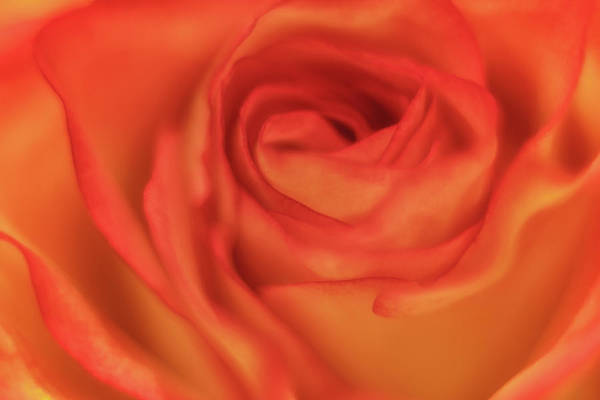 Passionate Photograph - Wrapped In Love by Marnie Patchett
