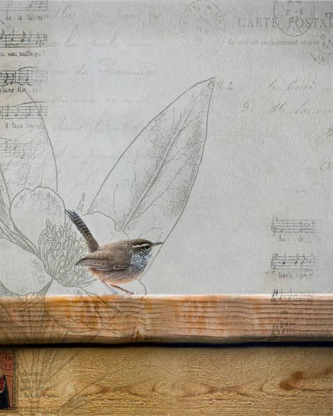 Wren Photograph - Wren 2 by Rebecca Cozart