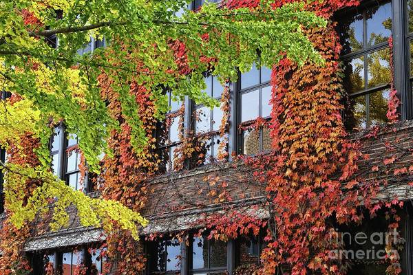 Photograph - Wsu Somsen Windows In Fall by Kari Yearous