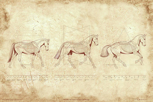 Wall Art - Painting - Wtc, Walk, Trot, Canter, The Horse's Gaits Revealed by Catherine Twomey