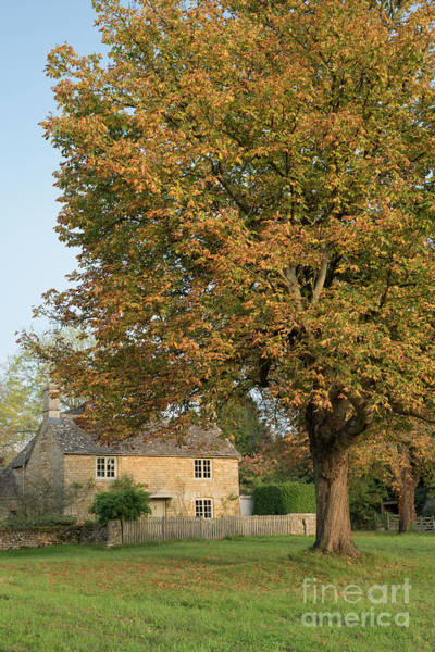 Wall Art - Photograph - Wyck Rissington In Autumn by Tim Gainey