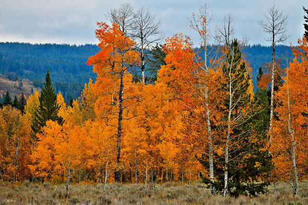 Fall Scenery Mixed Media - Wyoming 009 by G Berry