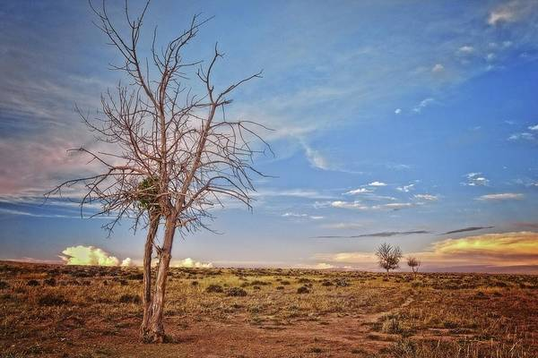 Photograph - Wyoming High Desert Beauty by Amanda Smith