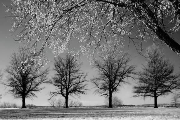 Photograph - x4 by Brian N Duram