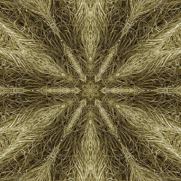 Digital Art - Xeriscapist Fiber Grass by Becky Titus