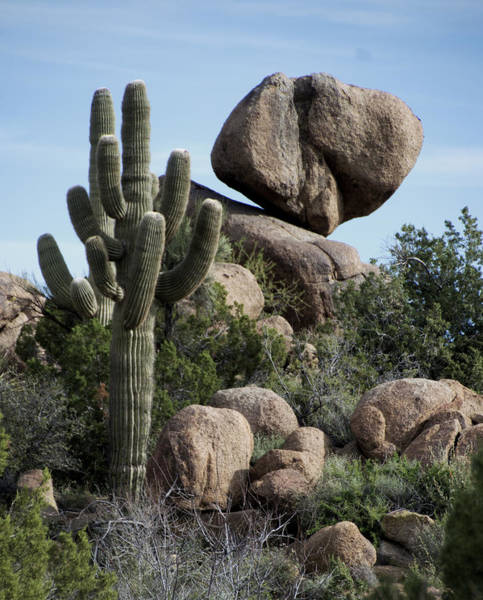 Painting - Balancing Act In The Arizona Desert by Barbara Snyder