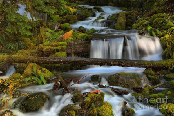 Photograph - Sol Duc Streams by Adam Jewell