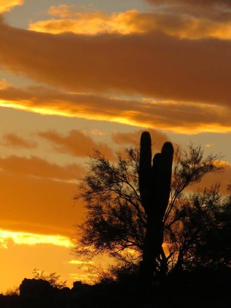 Photograph - Y Cactus Sunset 8 by Judy Kennedy
