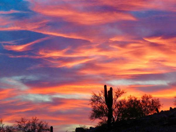 Photograph - Y Cactus Sunset 2 by Judy Kennedy