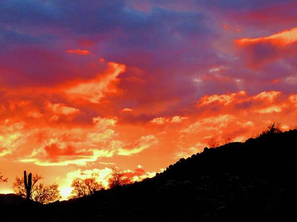 Photograph - Y Cactus Sunset 6 by Judy Kennedy