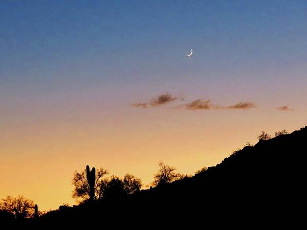 Photograph - Y Cactus Sunset Moonrise by Judy Kennedy