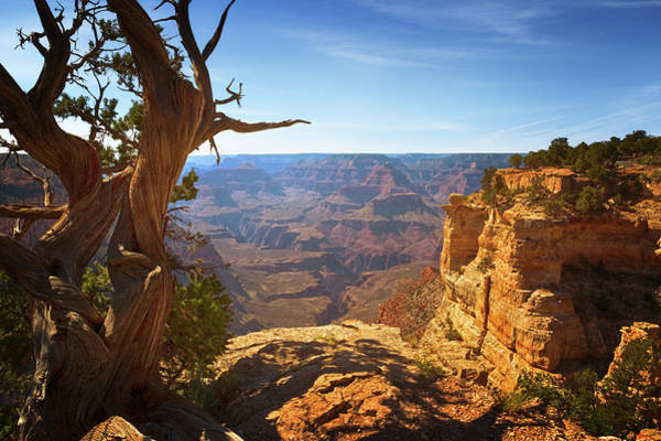 Photograph - Yaki Point by Susan Rissi Tregoning