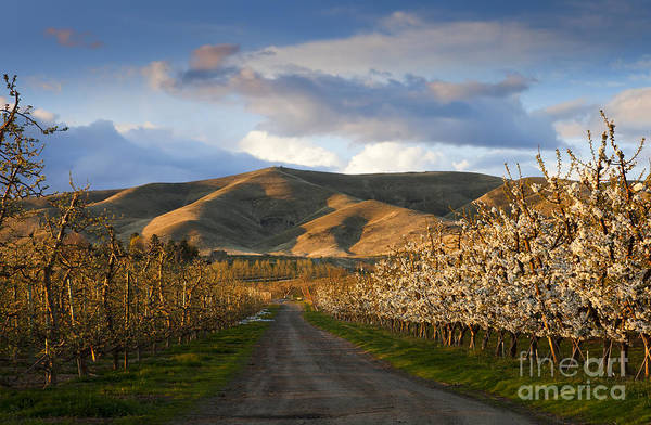 Wall Art - Photograph - Yakima Valley Spring by Mike  Dawson
