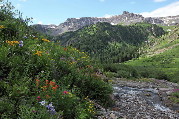 Photograph - Yankee Boy Basin2 by Susan Rovira
