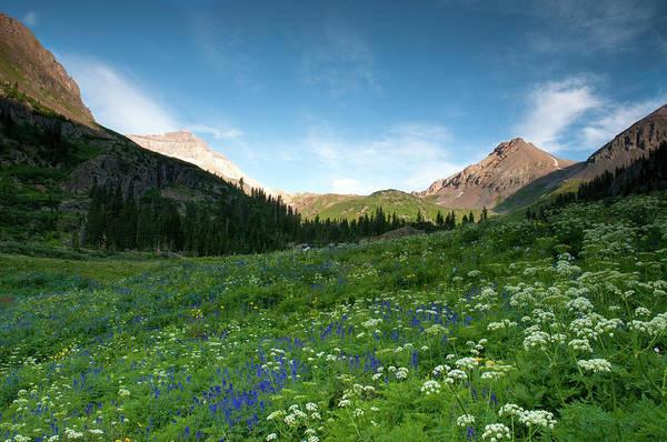 Photograph - Yankee Boy Wildflowers by Steve Stuller