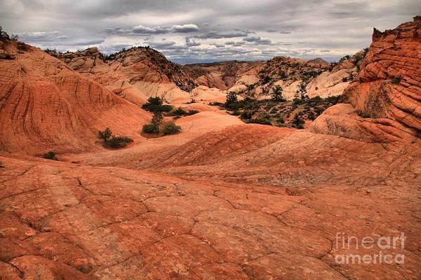 Photograph - Yant Flat Checkerboard Mesa by Adam Jewell