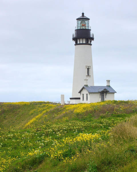 Photograph - Yaquina Head Lighthouse by Harold Rau