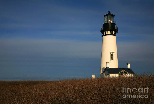 Wall Art - Photograph - Yaquina Head by Timothy Johnson