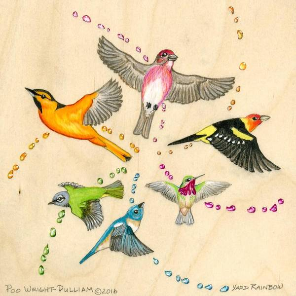 Oriole Drawing - Yard Rainbow by Poo Wright-Pulliam