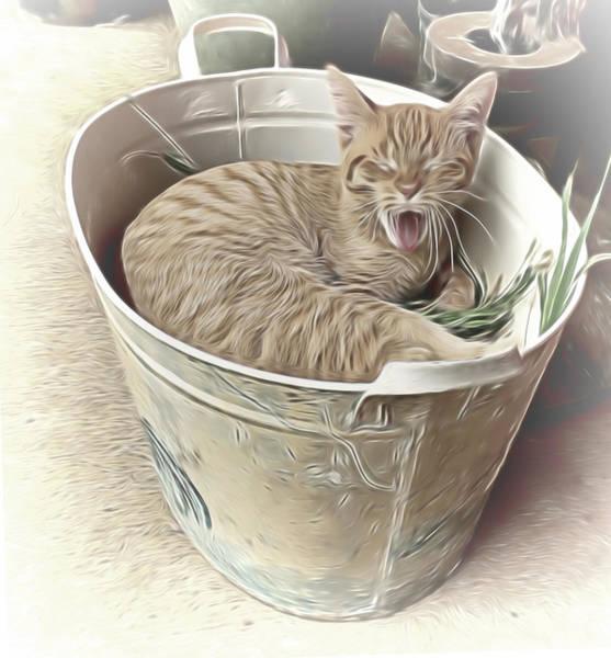 Mixed Media - Yawning Cat by Pamela Walton