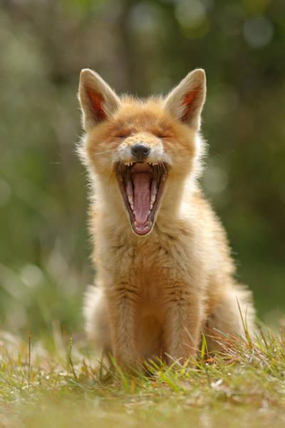 Yawn Photograph - Yawning Fox Kit by Roeselien Raimond