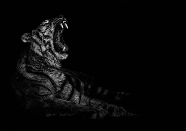 Sumatran Drawing - Yawning Tiger by Katie Harris