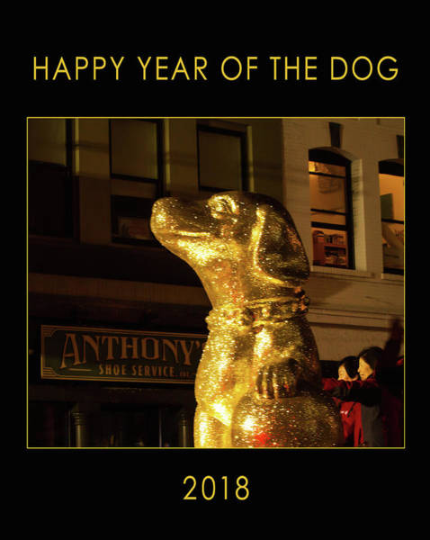 Photograph - Year Of The Dog by Bonnie Follett
