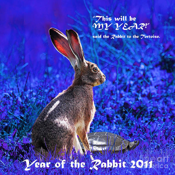 Chinese New Year Rabbit Wall Art - Photograph - Year Of The Rabbit 2011 . Square Blue by Wingsdomain Art and Photography