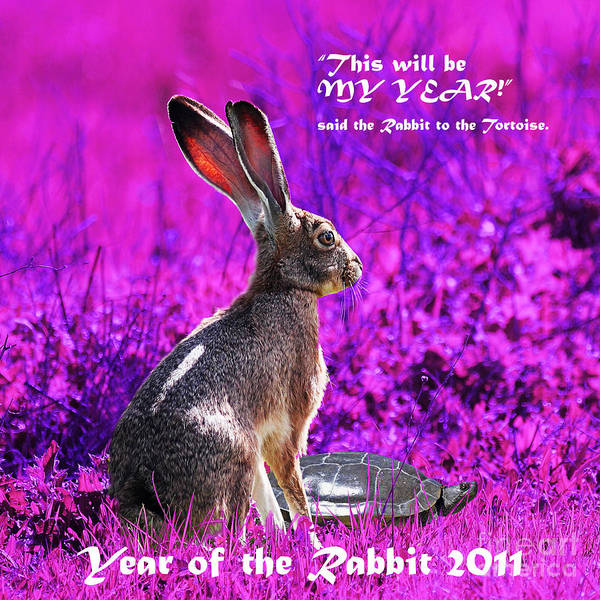 Chinese New Year Rabbit Wall Art - Photograph - Year Of The Rabbit 2011 . Square Magenta by Wingsdomain Art and Photography