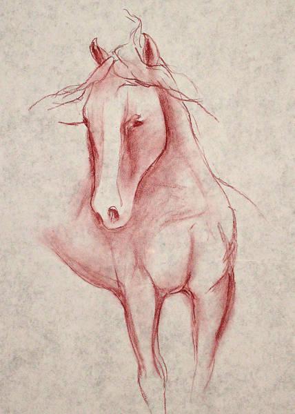 Warmbloods Drawing - Yearling by Jennifer Fosgate