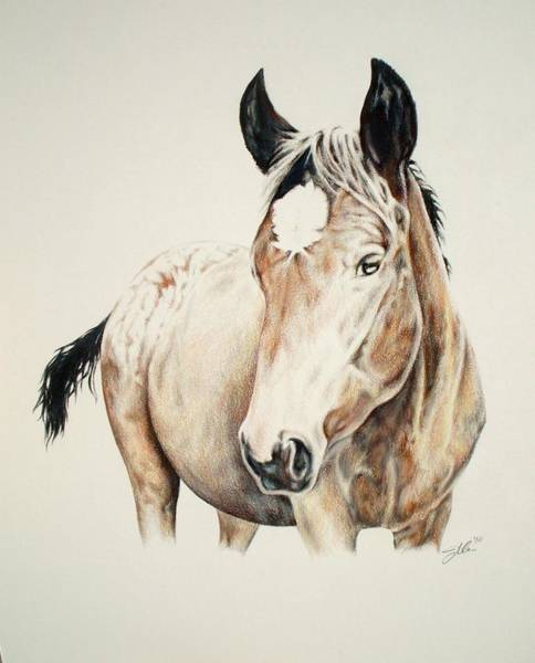 Appaloosa Drawing - Yearling by Jennifer Bonset
