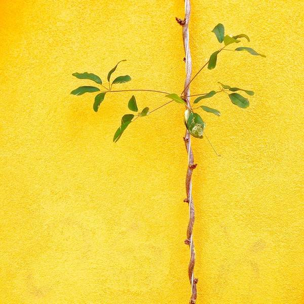 Wall Art - Photograph - Yellow #2 by Julie Gebhardt