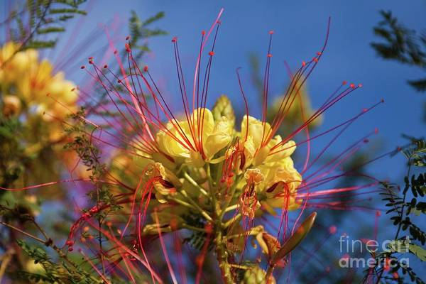 Photograph - Yellow And Blue by Tatiana Travelways