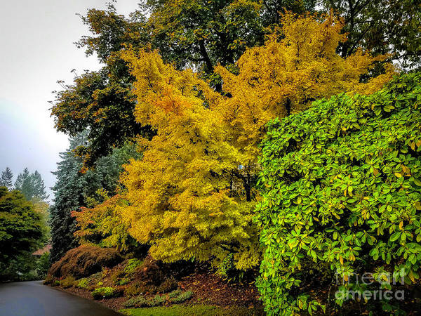 Photograph - Yellow And Green by Jon Burch Photography